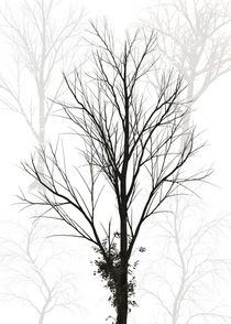 Trees abstract von Print Point