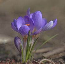 Frühlingserwachen von Andrea Potratz