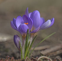 Frühlingserwachen by Andrea Potratz
