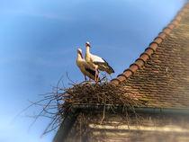 Weißstörche beim Nestbau by Christine Horn