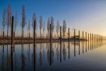 Der Jachthafen von Moos bei Sonnenaufgang II - Halbinsel Höri - Bodensee von Christine Horn