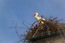 Weißstorch auf dem Nest beim Affenberg Salem von Christine Horn