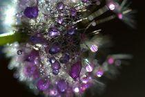 Fleur de cristal by sylvie  léandre