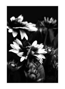 Blüten in Schwarzweiß von Carmen Varo