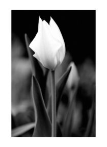 Blüte in Schwarzweiß von Carmen Varo