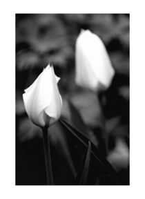 Schwarz-weiß von carmenvaro-fotografie