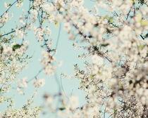 Flowering time von Andrei Grigorev