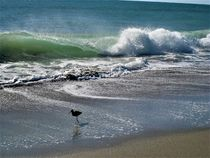 tobende Wellen und ein Strandläufer  by assy