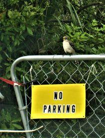 no parking !!! von assy