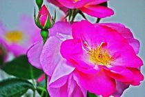 beautiful in pink... 2 by loewenherz-artwork