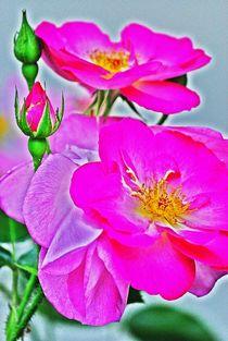 beautiful in pink... 3 by loewenherz-artwork
