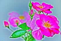beautiful in pink... 1 by loewenherz-artwork