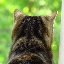 Getigerte Katze  von Eva Urban