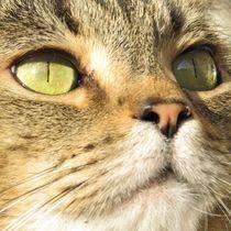 Katze in der Sonne by Eva Urban