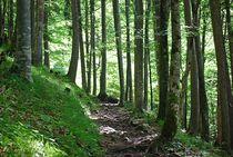lichter Wald... 2 von loewenherz-artwork