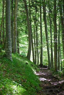 lichter Wald... 1 von loewenherz-artwork