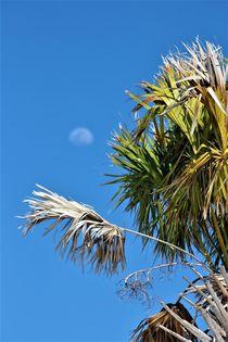Fächerpalme, mit Mond im Hintergrund ! by assy