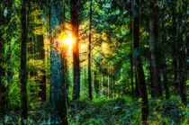 Sommerwald in der Abendsonne von Nicc Koch