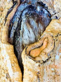 das Leben der Bäume von k-h.foerster _______                            port fO= lio