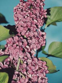 Lilac von Andrei Grigorev