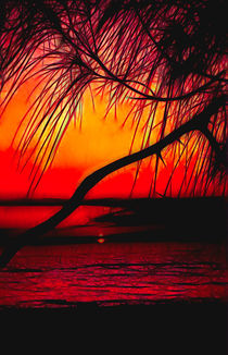 Red Sunset Design by Rosalie Scanlon