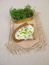 Butterbrot mit Kresse Sprossen in der Fischbüchse von Heike Rau