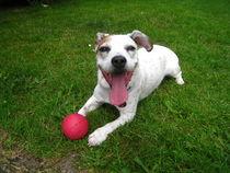 Ball spielen macht Spaß von assy