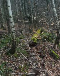 Waldtag von Maria Wald