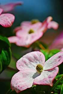 Blütenrausch... von loewenherz-artwork