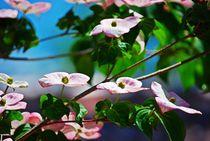 Blütenrausch... 3 von loewenherz-artwork