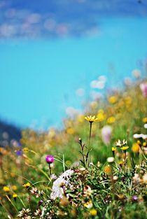Bergblumenwiese... 1 von loewenherz-artwork