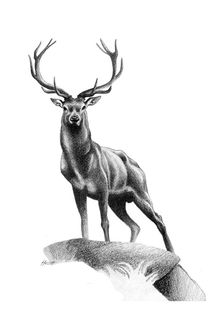 All Muscle - Red Stag von Patricia Howitt