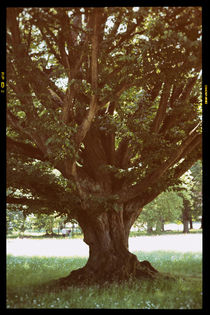 Alt wie ein Baum von Bastian  Kienitz