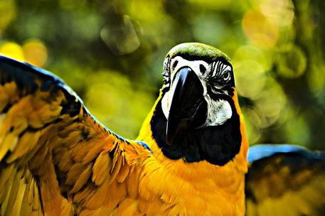 Macaw-9
