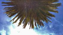 Palmtree by Susann Ilge