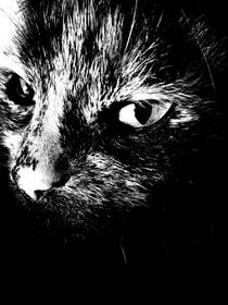 Nachts sind alle Katzen grau von Maria Wald