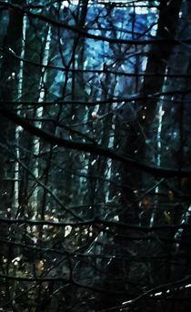 Geist des Waldes von Maria Wald