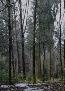 Winterwald by Maria Wald