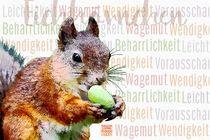 Eichhörnchen - Furchtlose Leichtigkeit von Astrid Ryzek