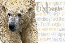 Eisbär - König der Arktis von Astrid Ryzek