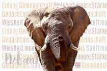 Elefant - Sanftmütiger Riese by Astrid Ryzek