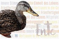 Ente - Einheit des Lebens von Astrid Ryzek