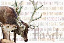 Hirsch - Würdevolle Sanftheit by Astrid Ryzek