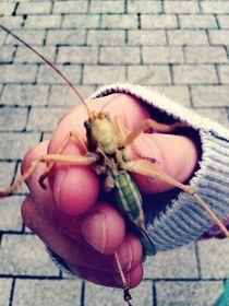 Kinderhand mit Grashüpfer by Maria Wald