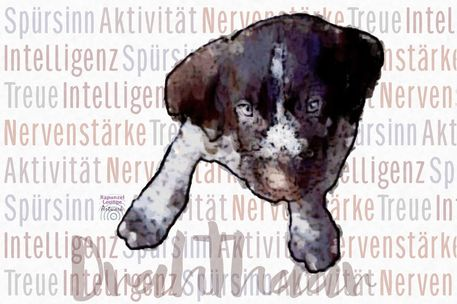 Hund-drahthaar-wesen
