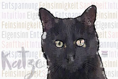 Katze-schwarz-wesen