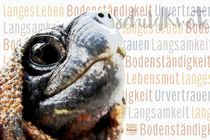 Schildkröte - Ewiges Leben von Astrid Ryzek