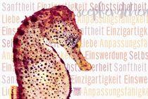 Seepferdchen - Wunder der Meere by Astrid Ryzek