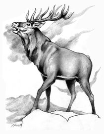 The Challenge Stag by Patricia Howitt