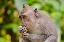 Affe frisst von Mario Schlack